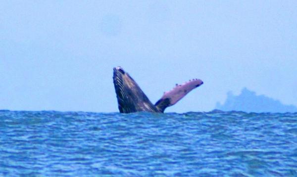 blog-whale1